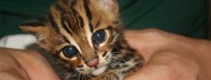 Foto: Welttierschutzgesellschaft